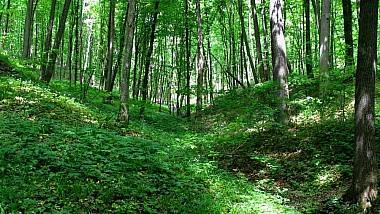 Imaginea zilei: Bătăliei celor cinci oștiri, într-o pădure din Cehia