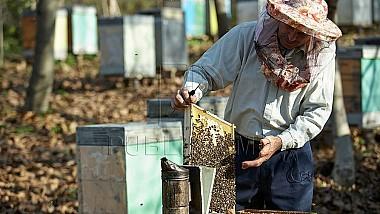Afacere de succes cu miere de albine la Vadul lui Vodă. Un bărbat a câştigat un grant din partea AOAM