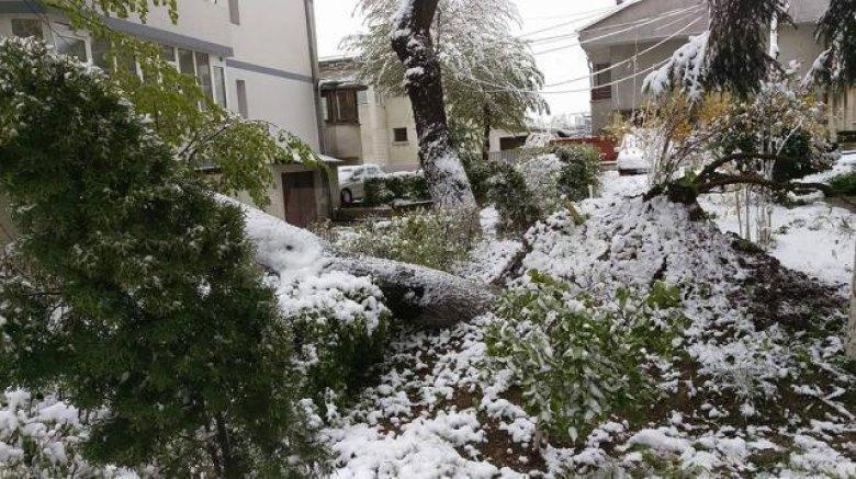 Ce se va întâmpla cu arborii căzuţi?