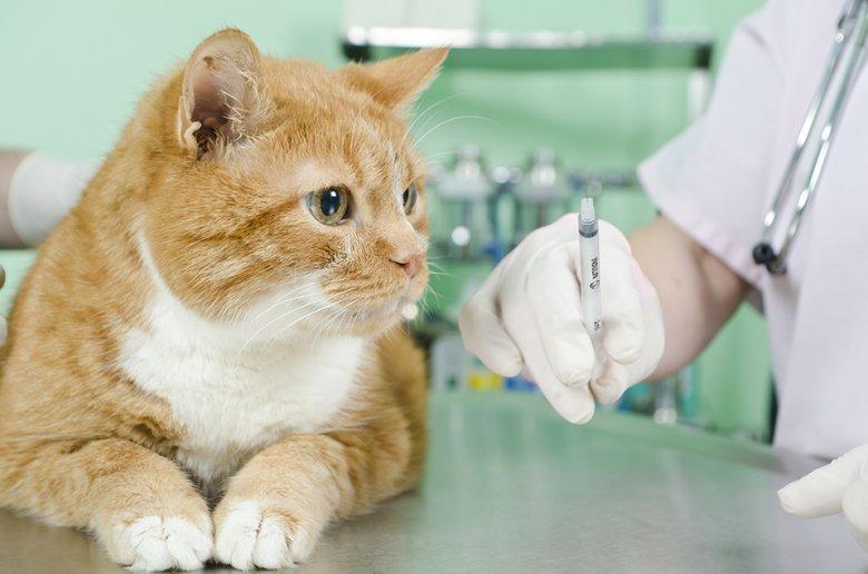 Asistenţă veterinară la domiciliu