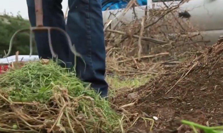 Compost pentru un sol sănătos
