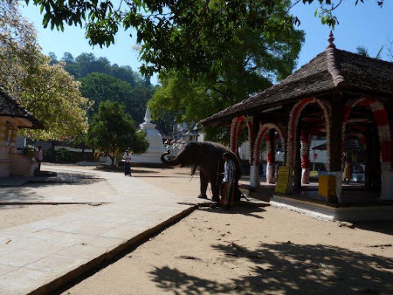 Imaginea zilei: Piscină pentru elefanți, amenajată de administraţia unei Grădini Zoologice