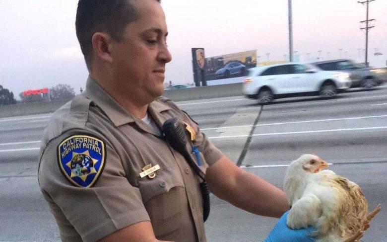 Imaginea zilei: Misiune imposibilă pentru câțiva polițiști din California după ce o cușcă plină cu păsări a căzut dintr-un camion pe o autostradă