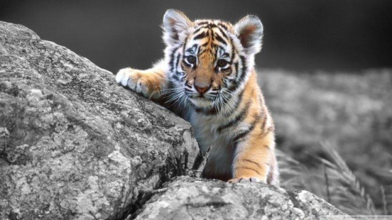 Test drive la ZOO. Reporterul de la Prima Oră a hrănit tigri şi a făcut curățenie la fazani