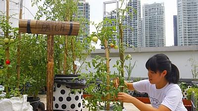 Imaginea zilei: Cum au reușit câțiva tineri din Hong Kong să transforme acoperișul unui bloc într-o grădină