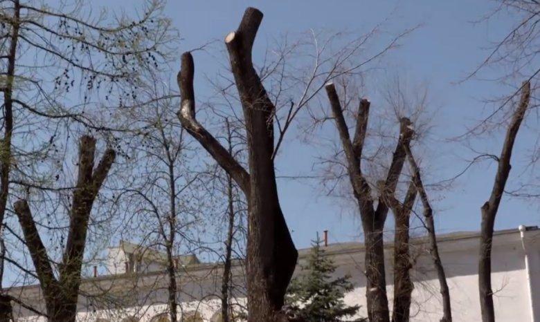 Copaci tăiaţi ca din topor pe străzile din Capitală! Care este motivul