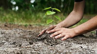 Pădurea Centenar, plantată în cadrul unui Memorandum. Cinci mii de puieţi de plopi şi frasin au fost sădiţi în lunca râului Prut