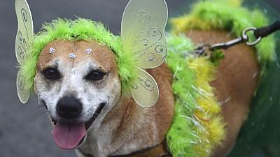 Imaginea zilei: La o paradă din orașul Florida, zeci de animale de companie îmbrăcate în costume originale au defilat alături de stăpânii lor
