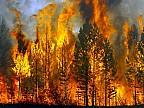 INCENDII DE PROPORȚII în Siberia. Peste 90 de mii de hectare de pădure, mistuite de flăcări