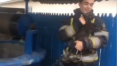 Imaginea zilei: Intervenție neobișnuită la Băcioi. Pompierii au salvat o pisică căzută într-o fântână publică