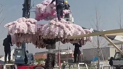 Cel mai mare pom de cireş înflorit, alcătuit din piese lego, a intrat în Cartea Recordurilor. Cât măsoară acesta