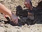 Descoperire arheologică extrem de valoroasă în localitatea Sagaidac. Au fost găsite urme ale unor aşezări din perioada romană