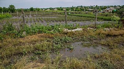 В Каушанского районе мощный ливень уничтожил урожай на сотни тысяч леев