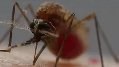 Ținem țânțarii da distanță! Care sunt cele mai eficiente soluții pentru a ne apăra de aceste insecte