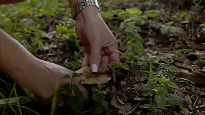 Ciupercile. Cât de periculoase sunt acestea și cum să ne ferim de cele otrăvitoare