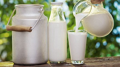 Beneficiile uimitoare ale laptelui de măgăriţă. Unde poate fi găsit în Moldova şi cât costă un litru