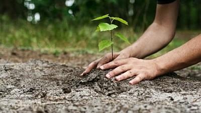Ziua Naţională a Înverzirii Plaiului. Peste 530 de hectare de pământ, împădurite până la sfârşitul lunii noiembrie
