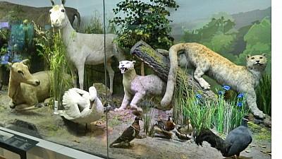 Pungi în loc de bilete. Oamenii pot intra la Muzeul de Istorie Naturală Grigore Antipa din Bucureşti, dacă aduc minimum 20 de pungi din plastic